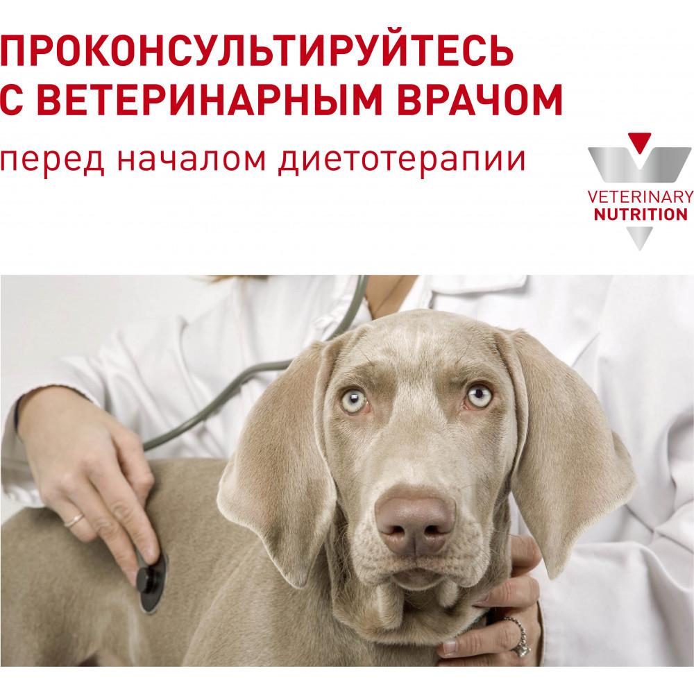 Royal Canin Neutered Adult Small Dog