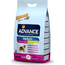Advance Medium Senior Chicken and Rice