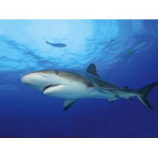 Tetra DecoArt Poster Shark&Coral