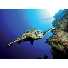 Tetra DecoArt Poster Turtle&Reef